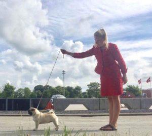New Danish Champion Naturedogs Pugs