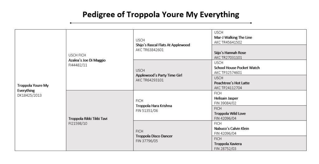 Pedigree Troppola Youre My Everything